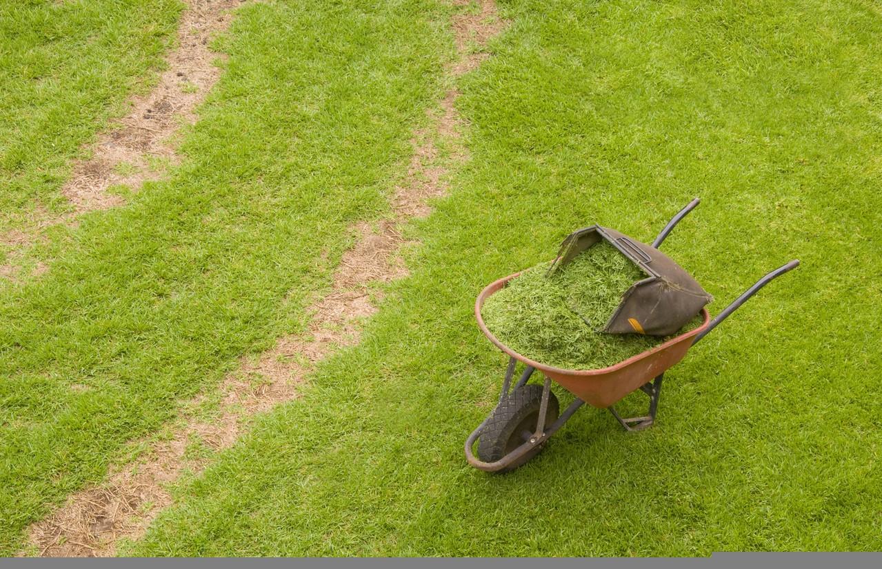 Maszyny w ogrodzie – wybieramy wertykulator